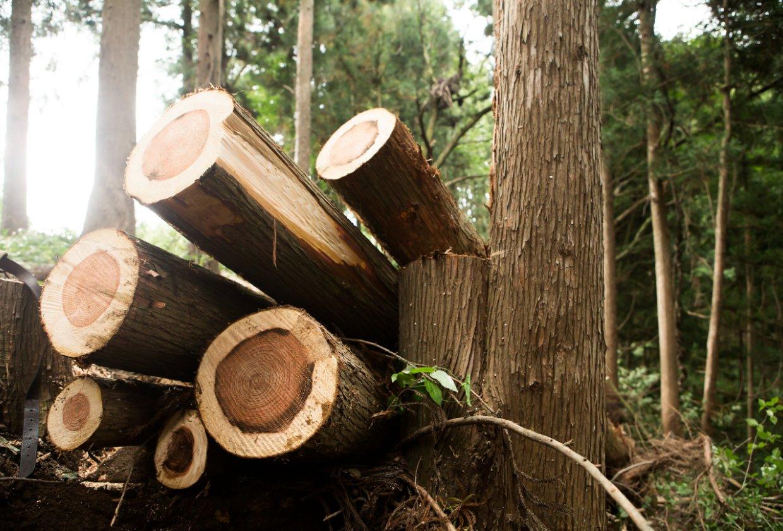 Holzenergie