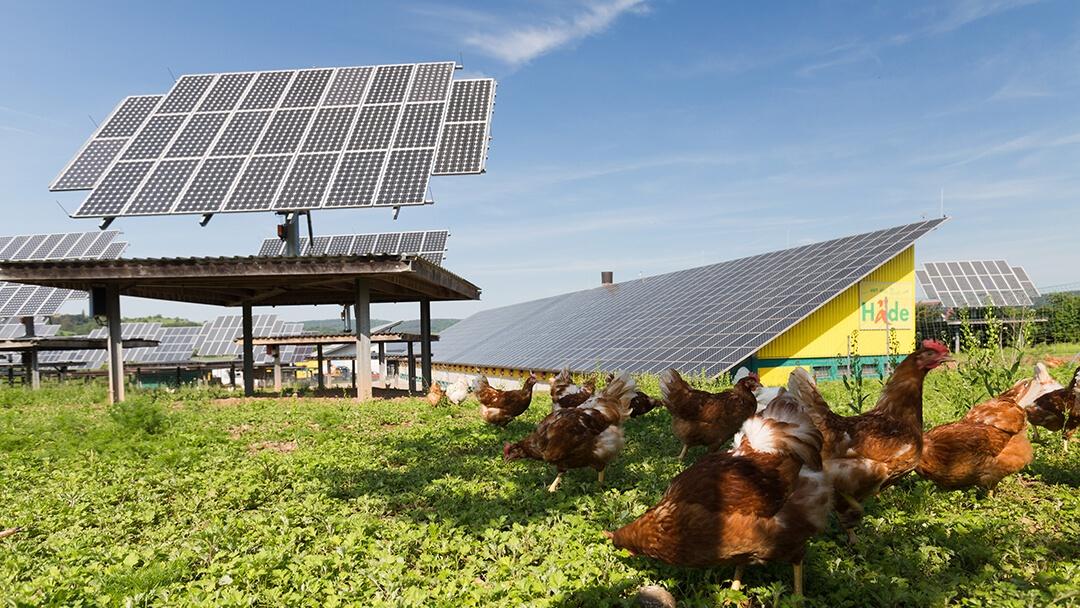 Solarenergie auf dem Geflügelhof