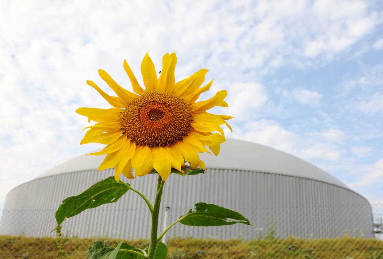 Grüne Gase: Energieträger der Zukunft?