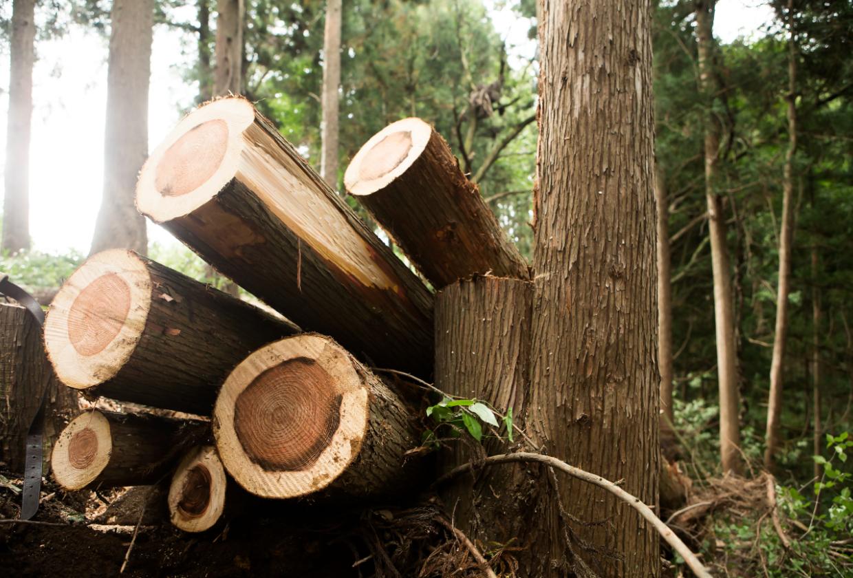 Auslaufende EEG-Förderung, Kohleausstieg und Standortumstrukturierungen: Jetzt auf Holzenergie umsteigen